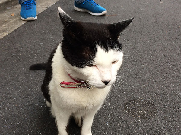 Cat_3100a.jpg