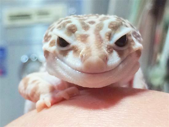 Smiley_158b.jpg