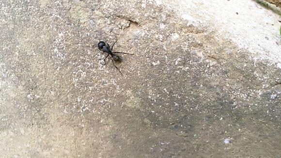 ant_4923c.jpg
