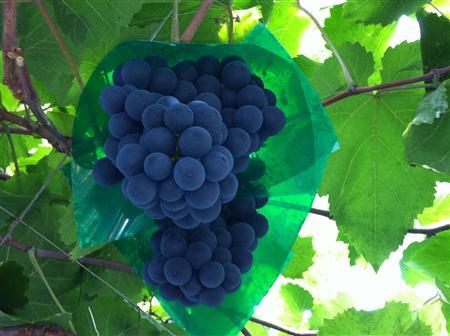 berry-a_0783.JPG