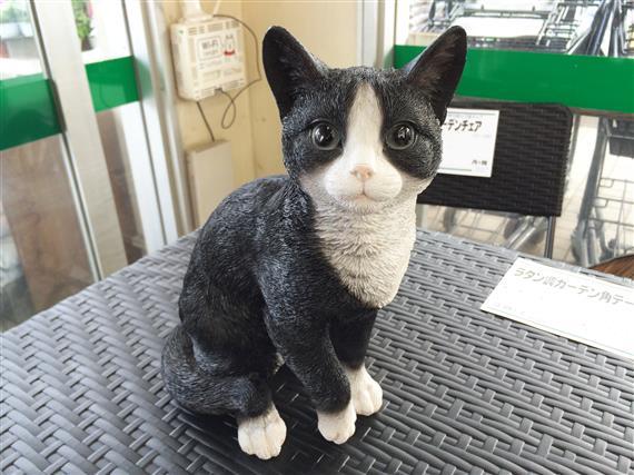 cat_101a.jpg