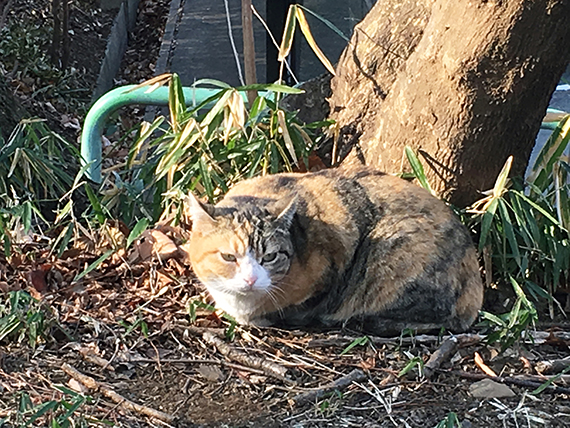 cat_3689b.jpg