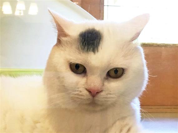 cat_5885c.jpg