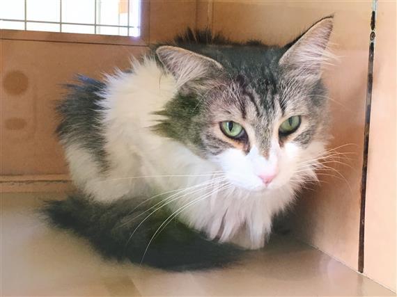 cat_5908a.jpg