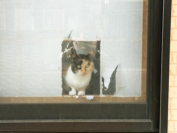 cat_6482b.jpg