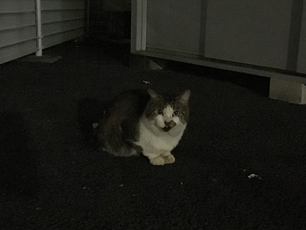 cat_8894b.jpg