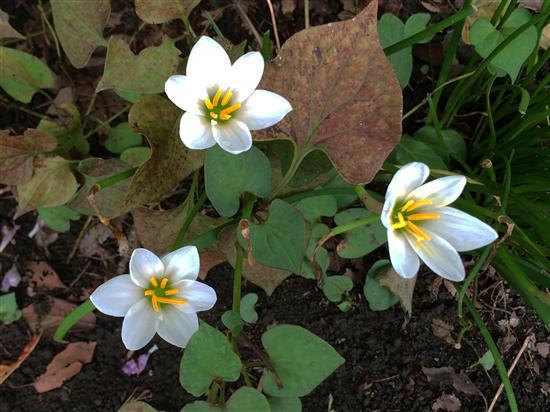 flower_015a.jpg