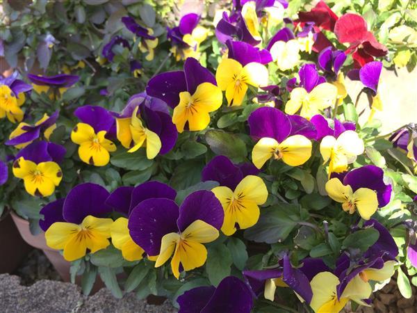 flower_025a.jpg