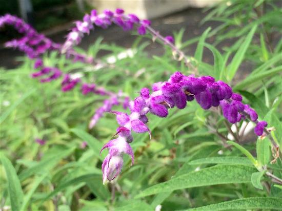 flower_037a.jpg