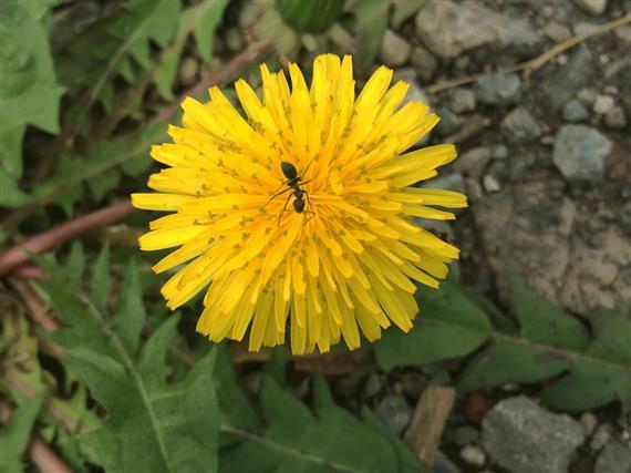 flower_040a.jpg