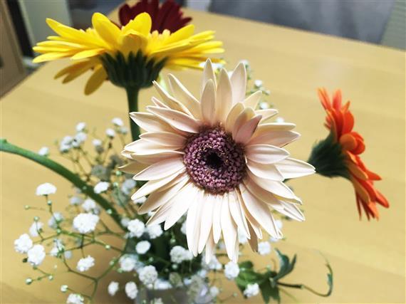 flower_0636a.jpg