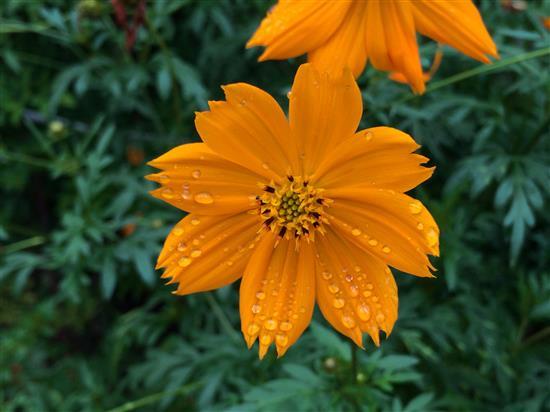 flower_070e.jpg
