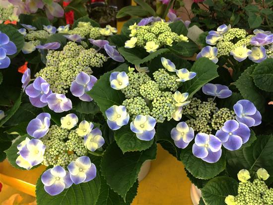 flower_146a.jpg