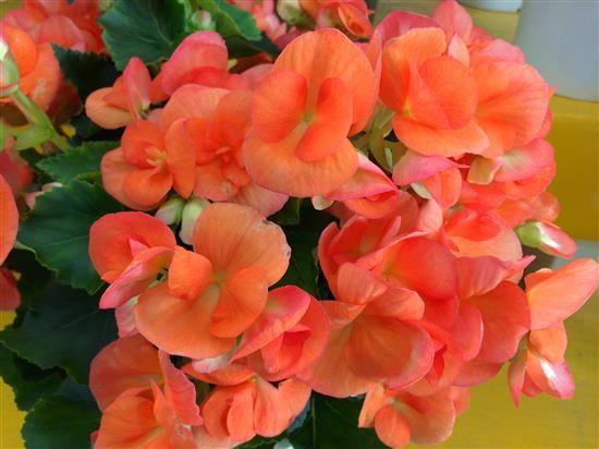 flower_149b.jpg