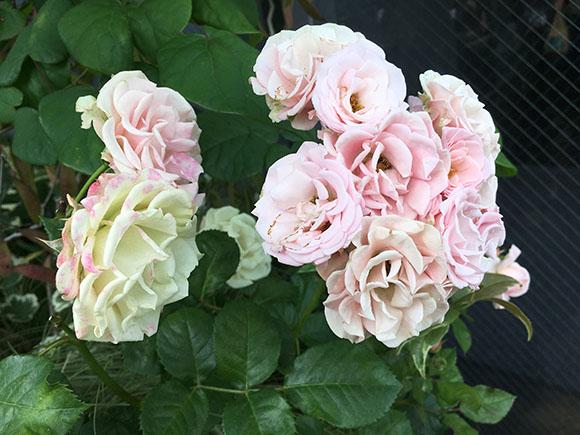 flower_1569b.jpg