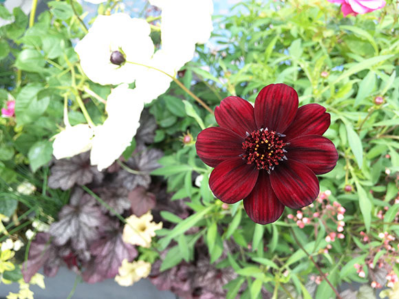 flower_1571c.jpg