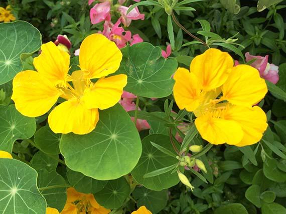 flower_1662d.jpg