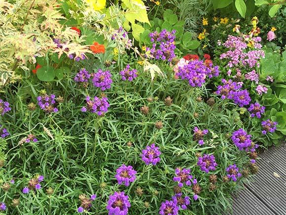 flower_1712c.jpg