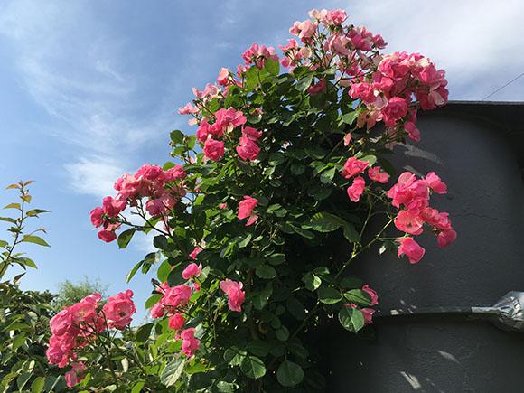 flower_1815b.jpg
