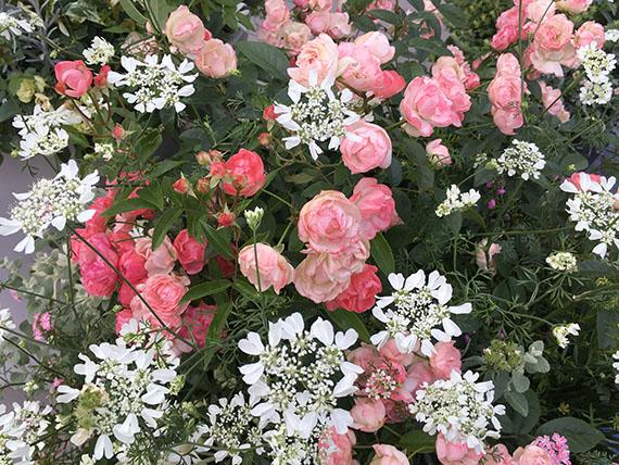 flower_1985a.jpg