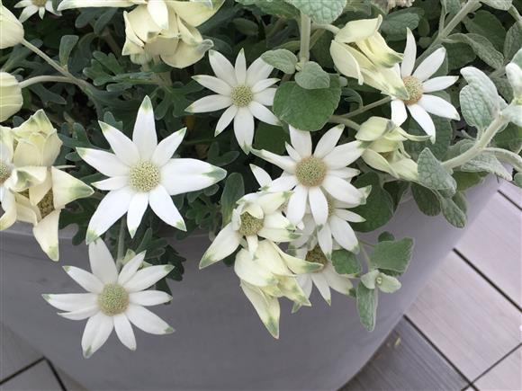 flower_2010.JPG