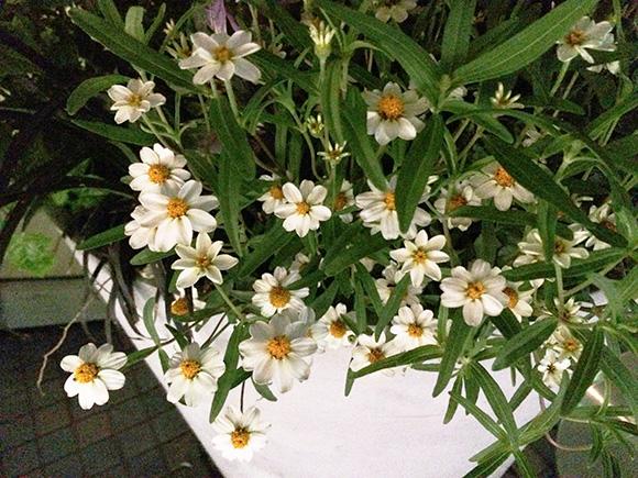 flower_2255b.jpg