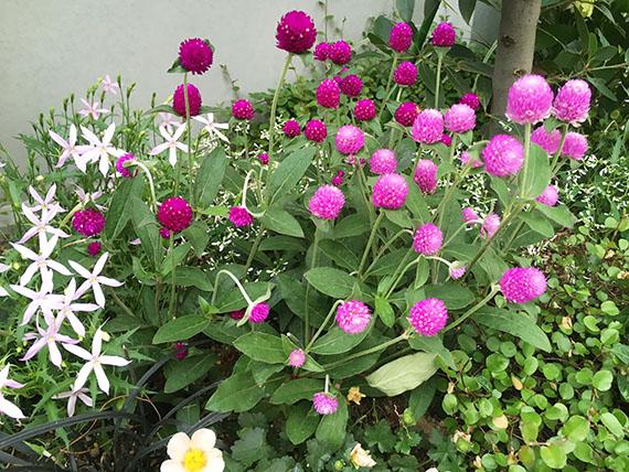 flower_2767c.jpg