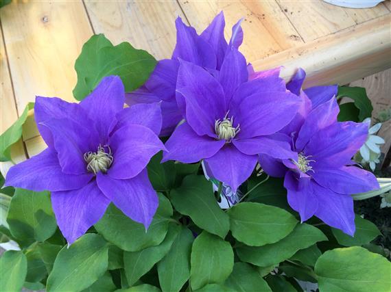 flower_276d.jpg