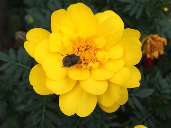 flower_3208a.jpg