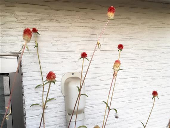 flower_3500a.jpg