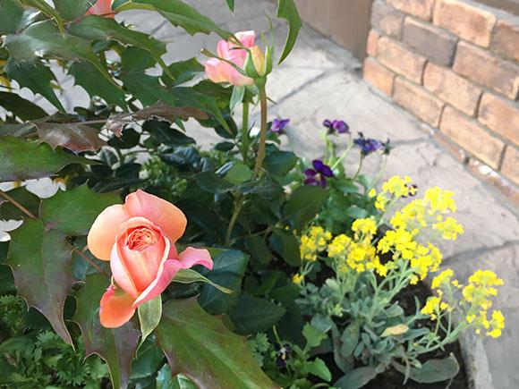 flower_3822b.jpg