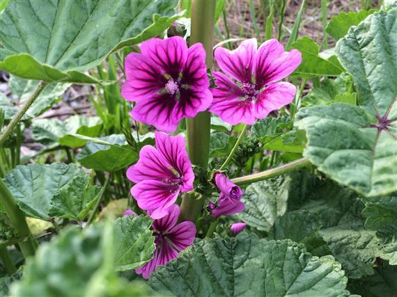 flower_438a.jpg