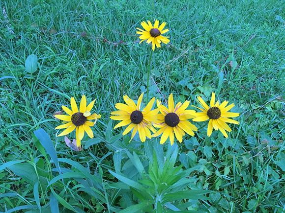 flower_6165b.jpg