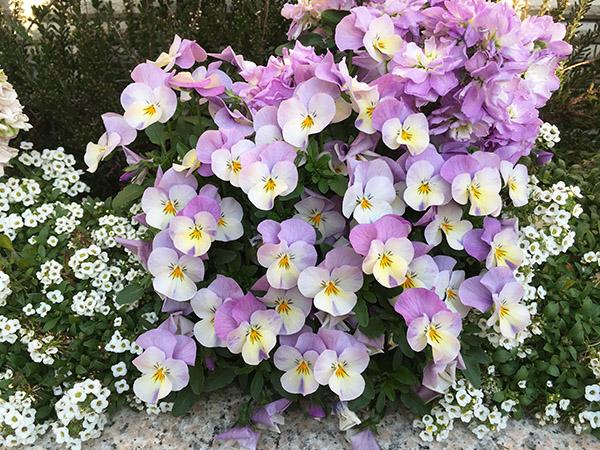flower_6389c.jpg