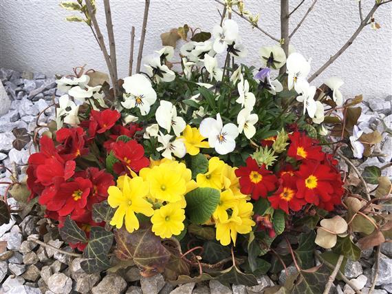 flower_6462a.jpg