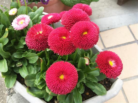 flower_6491a.jpg