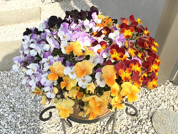 flower_6507b.jpg