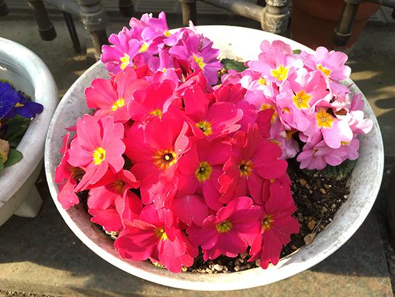 flower_6568a.jpg