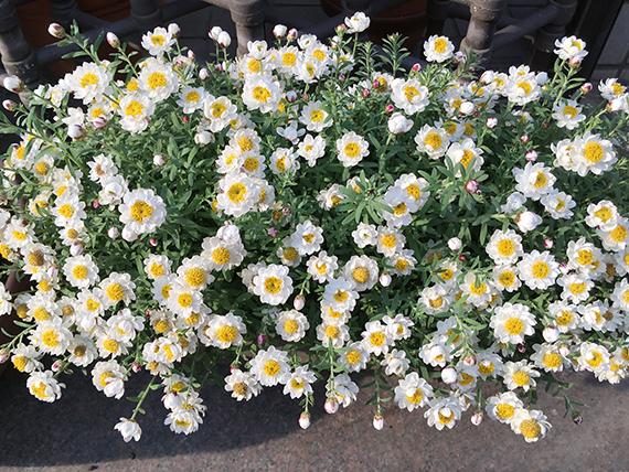 flower_6570b.jpg