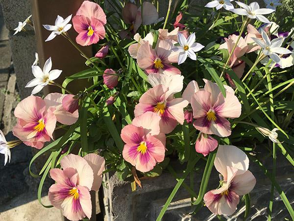 flower_6990b.jpg