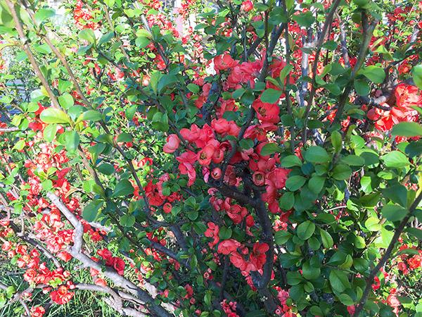 flower_7100b.jpg