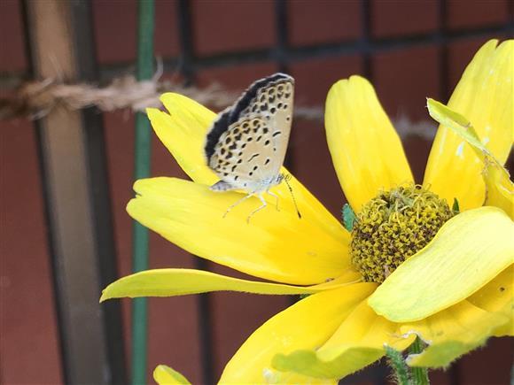 flower_7124b.jpg