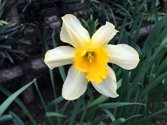 flower_7421a.jpg