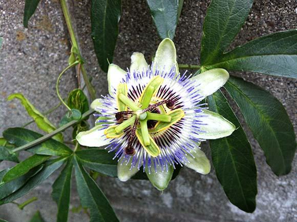 flower_7540a.jpg