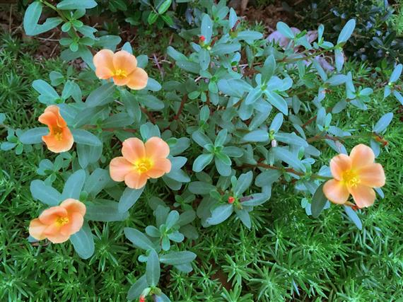 flower_7805a.jpg