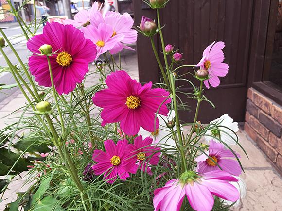 flower_7807b.jpg