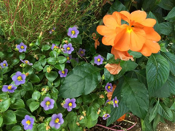 flower_7821b.jpg