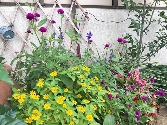 flower_7866b.jpg