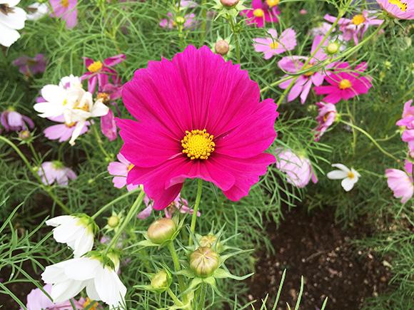 flower_7868b.jpg