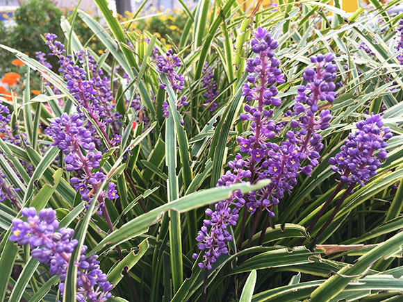 flower_7905b.jpg